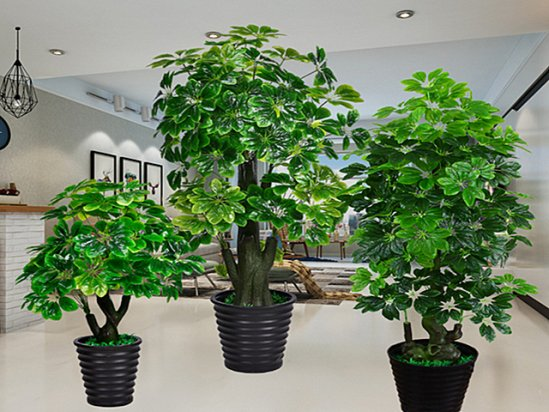 【盆景花卉】客厅最旺宅的大型植物是哪几个